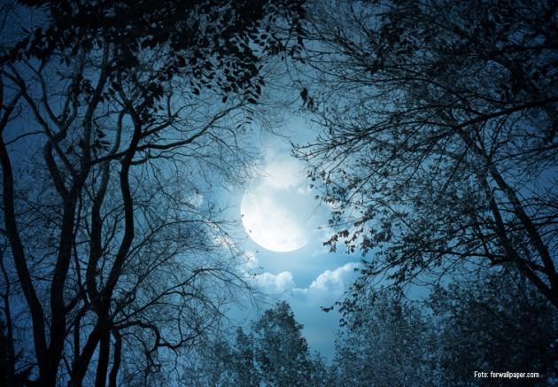 schlaf der bäume